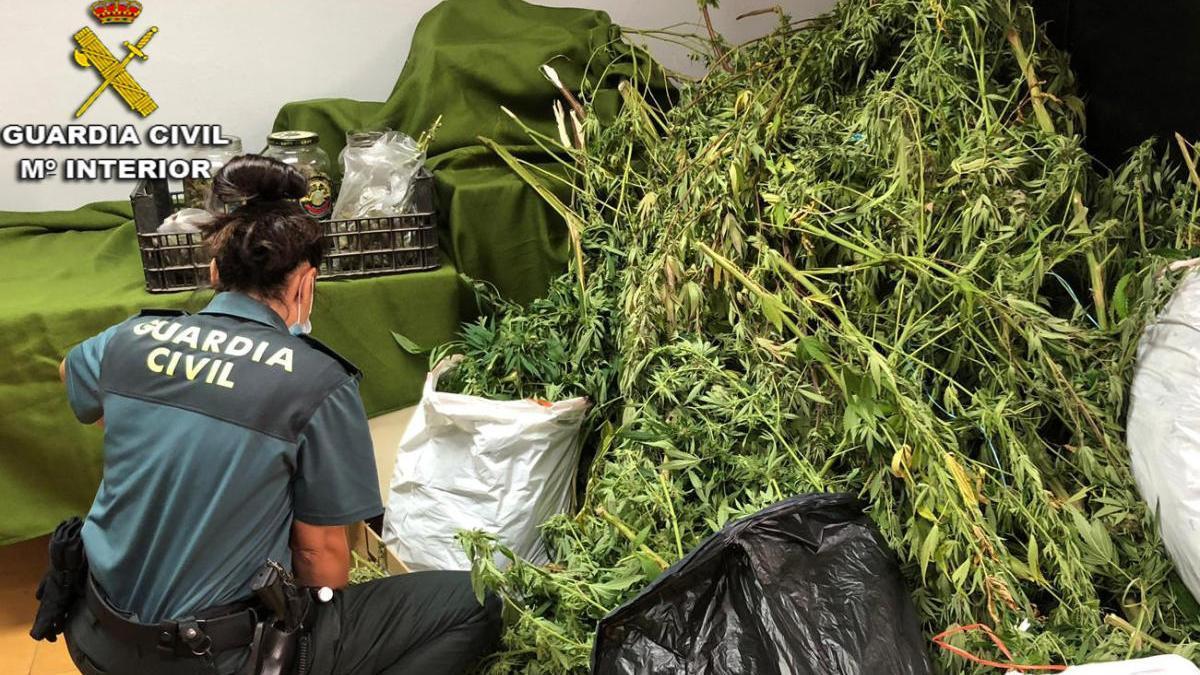 Desmantelada una plantación de marihuana en Soutomaior