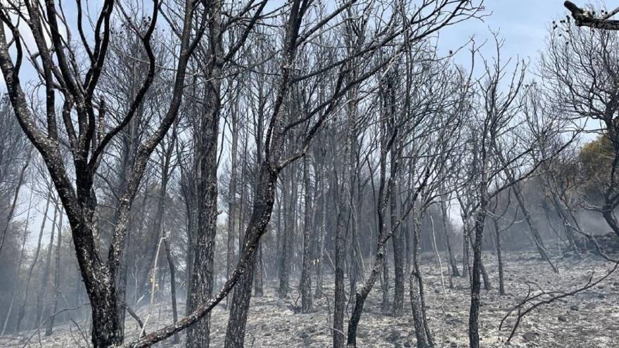 Un incendi crema 2.000 m2 de bosc a Piera