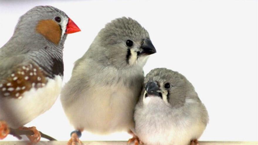 El ruido del tráfico urbano no deja cantar a las aves