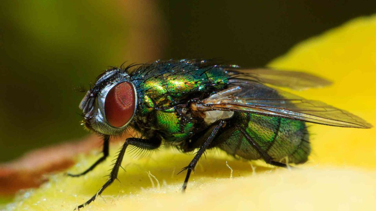 El truco definitivo para librarte de moscas y mosquitos en casa este verano.