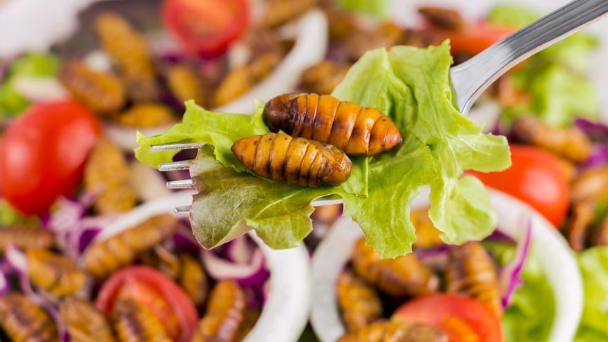 Solo el 10% de los europeos está dispuesto a comer insectos en lugar de carne roja