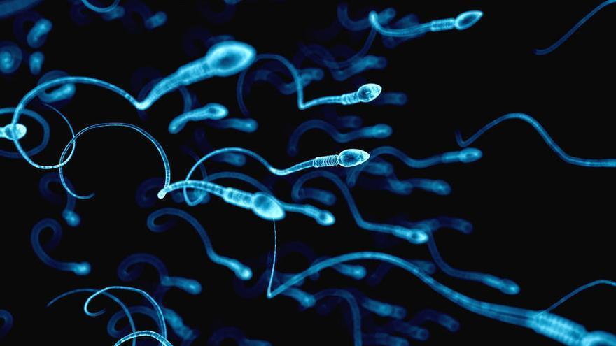 El sobrepeso y la obesidad afectan negativamente a la calidad del esperma