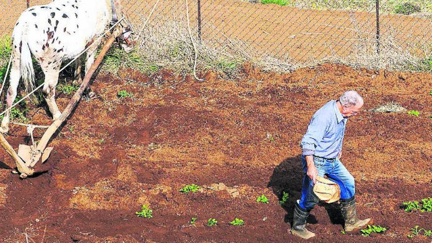 Asaga alerta de que la falta de lluvia  pone en riesgo la agricultura en el Sur