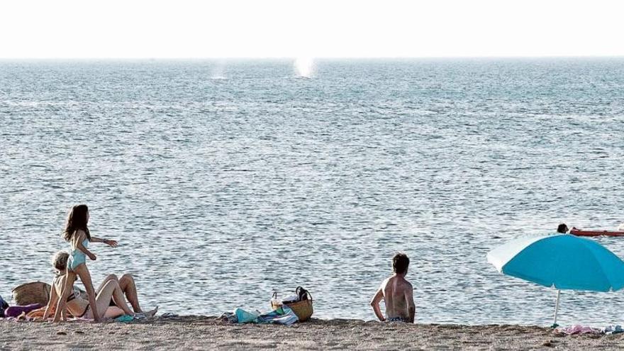 Ballenas cada vez  más cerca de la costa