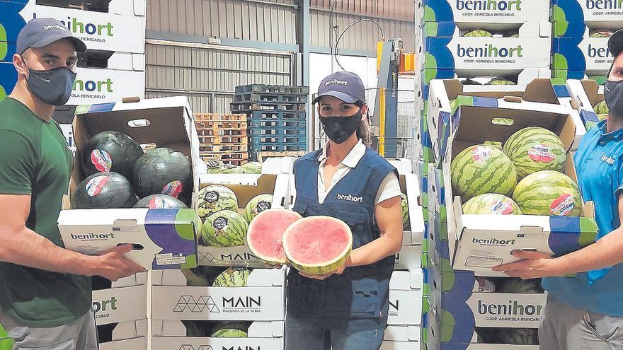 El temporal de Europa apuntilla la exportación de fruta de verano en Castellón