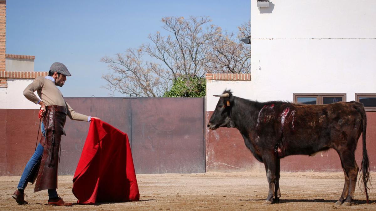 Emilio de Justo tienta a una vaca durante uno de sus entrenamientos.