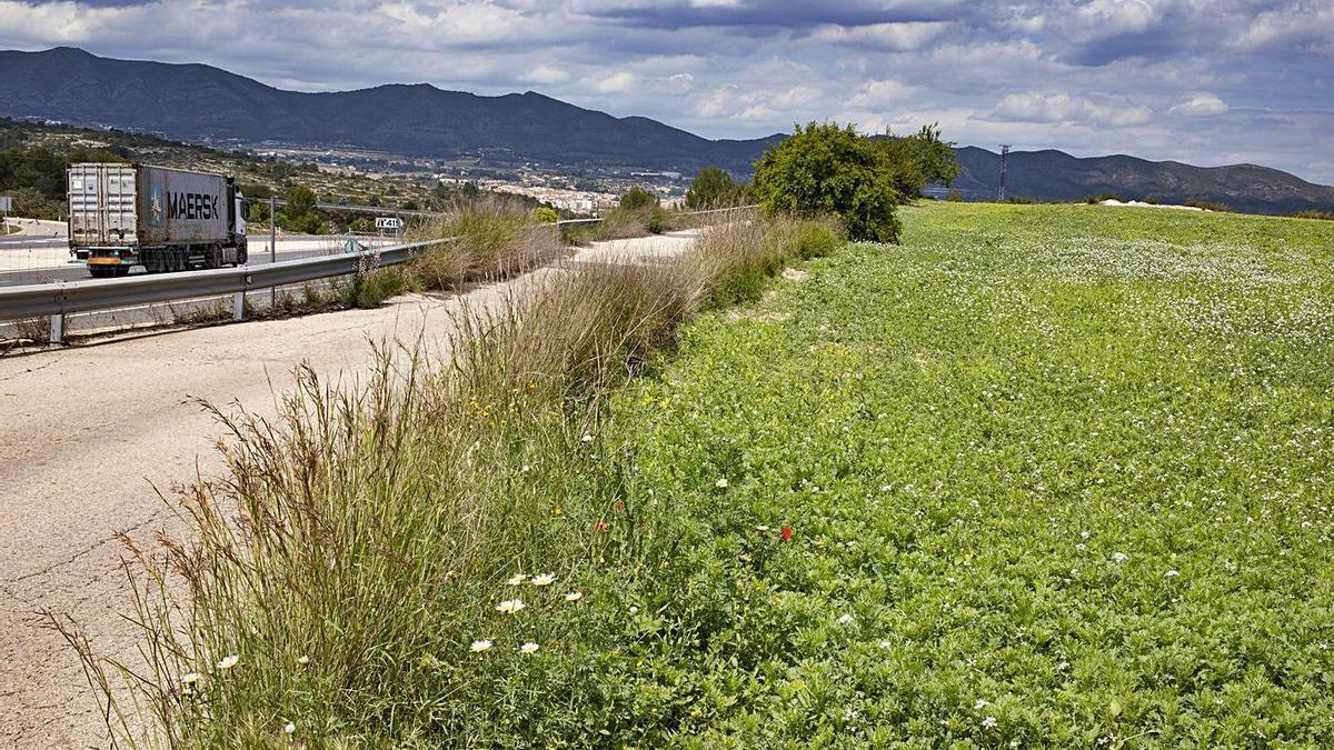 Terrenos junto a la autovía central donde se proyecta el PAI Sandón de Albaida, ayer. | PERALES IBORRA