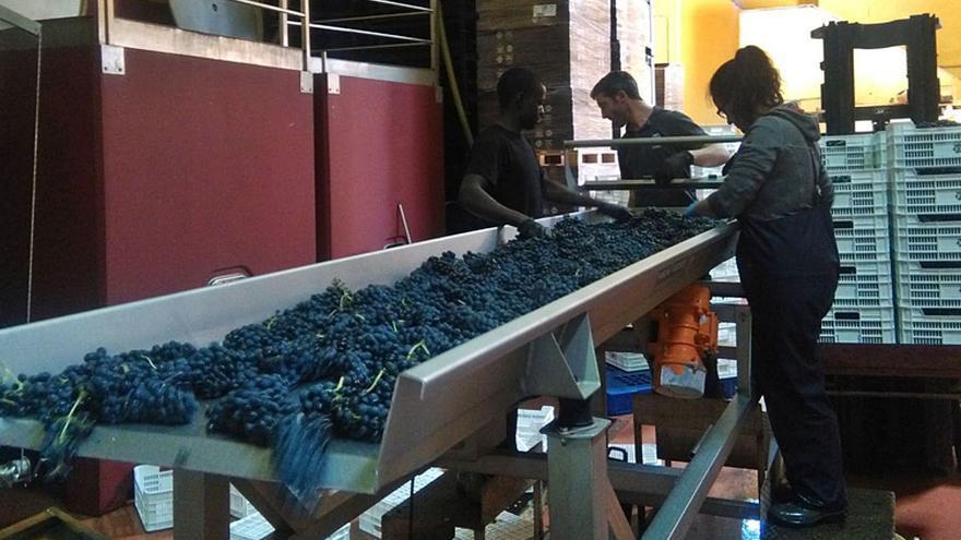 La DO Toro aprueba un aumento de producción de uva del 10% para la próxima vendimia