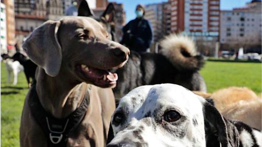 Las aceras de la ciudad están llenas de colillas y cacas de perros…