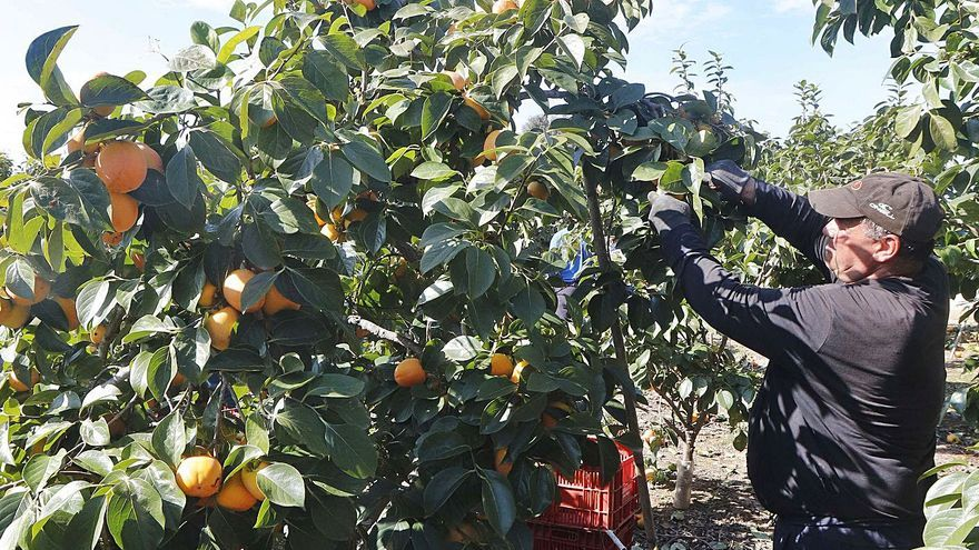 Un grupo de productores une sus cosechas para lograr mejor precio