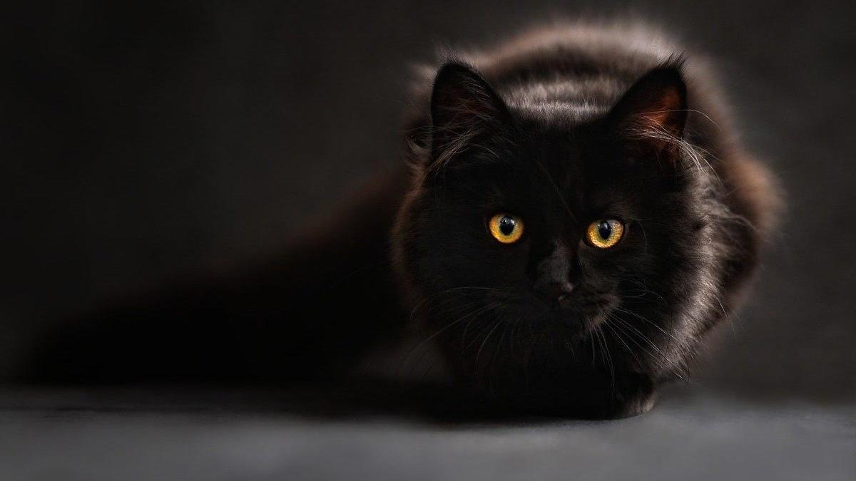Els veterinaris consellen que els afectats de Covid-19 deixin les mascotes a altres persones