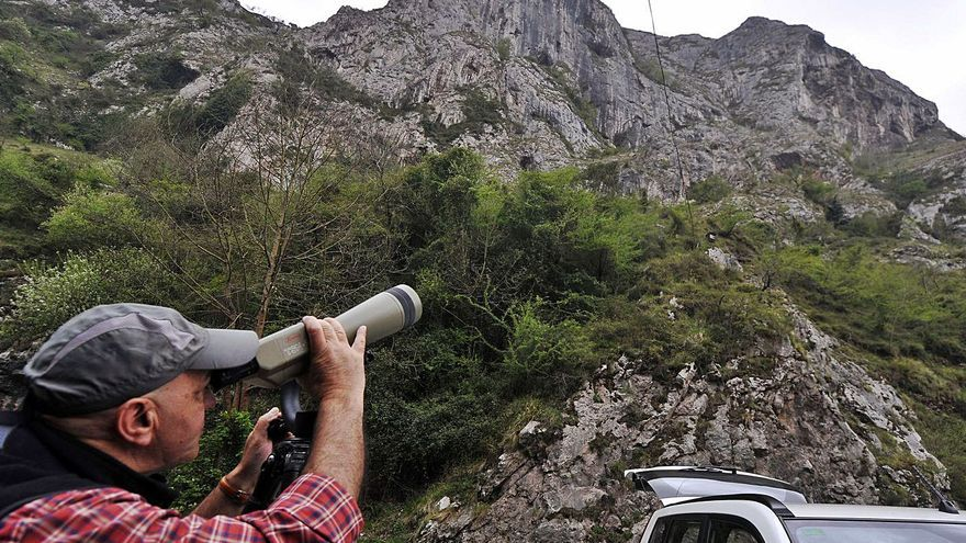 """Los vecinos denuncian la """"huida"""" de los alimoches de la comarca: culpan a la escalada sin control"""