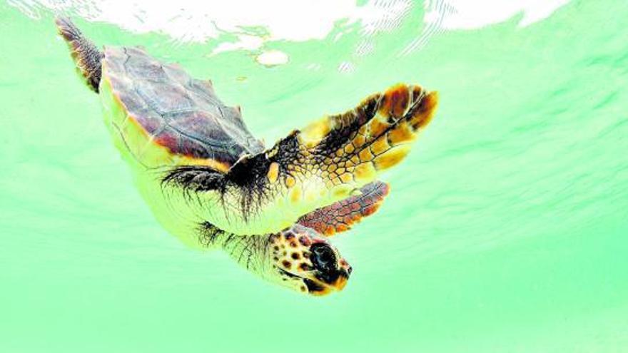 El 45% de 40 especies marinas analizadas tiene microplásticos