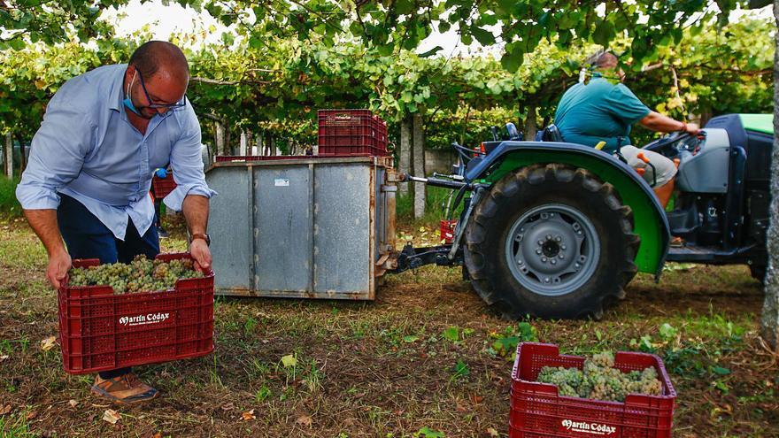 Rías Baixas ya supera los 41 millones de kilos de uva