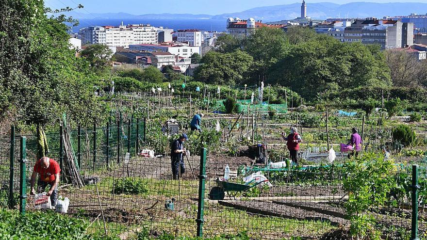 Desiste la empresa encargada de hacer los huertos urbanos en el parque Adolfo Suárez por retrasos en la tramitación