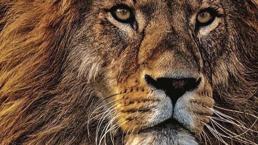 ¿Los zoos son el cielo o un infierno para los animales? Los mejores y peores zoos del mundo
