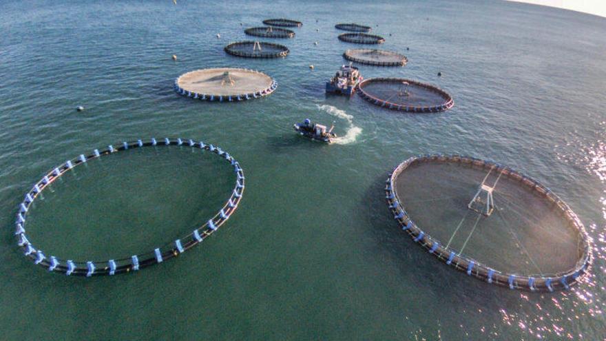 La acuicultura española, zarandeada por el Covid