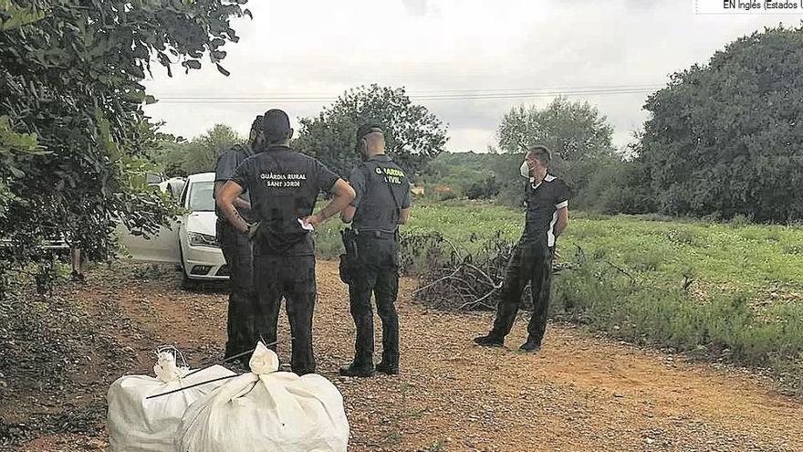 Agricultores alertan de oleadas de robos de algarrobas en el Maestrat