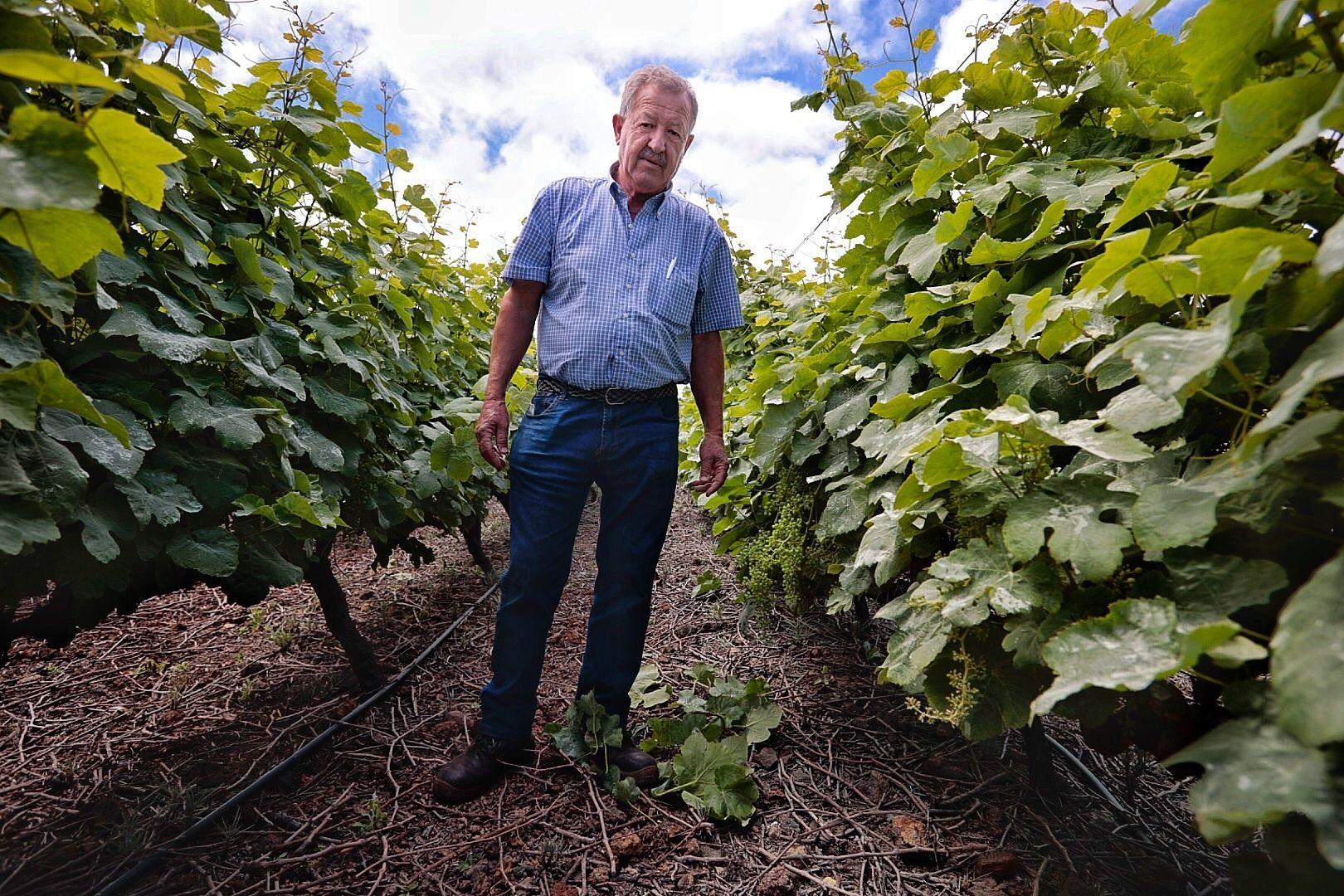 Sector vitivinícola. Bodegas Marba