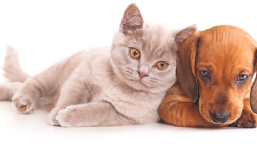 Las mascotas también llevan fatal las olas de calor