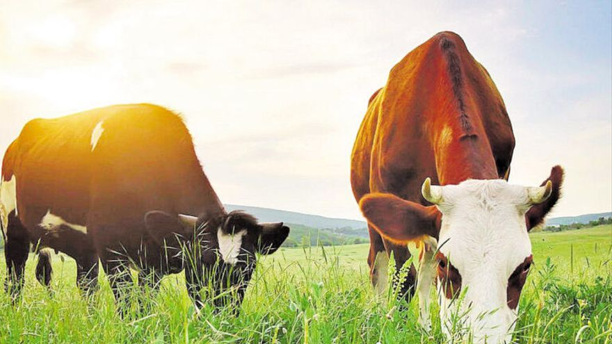 Así impactará el cambio climático en los cultivos y la ganadería de España