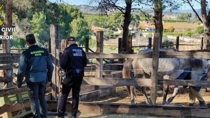 Más de 300 detenidos por maltrato animal en los primeros 6 meses del año