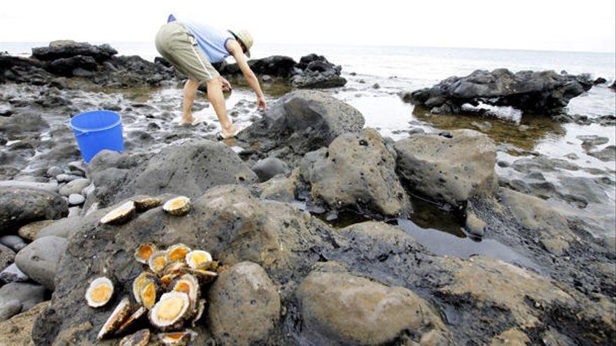 Incautan más de 480 kilos de marisco y pescado ilegal en Semana Santa en Canarias