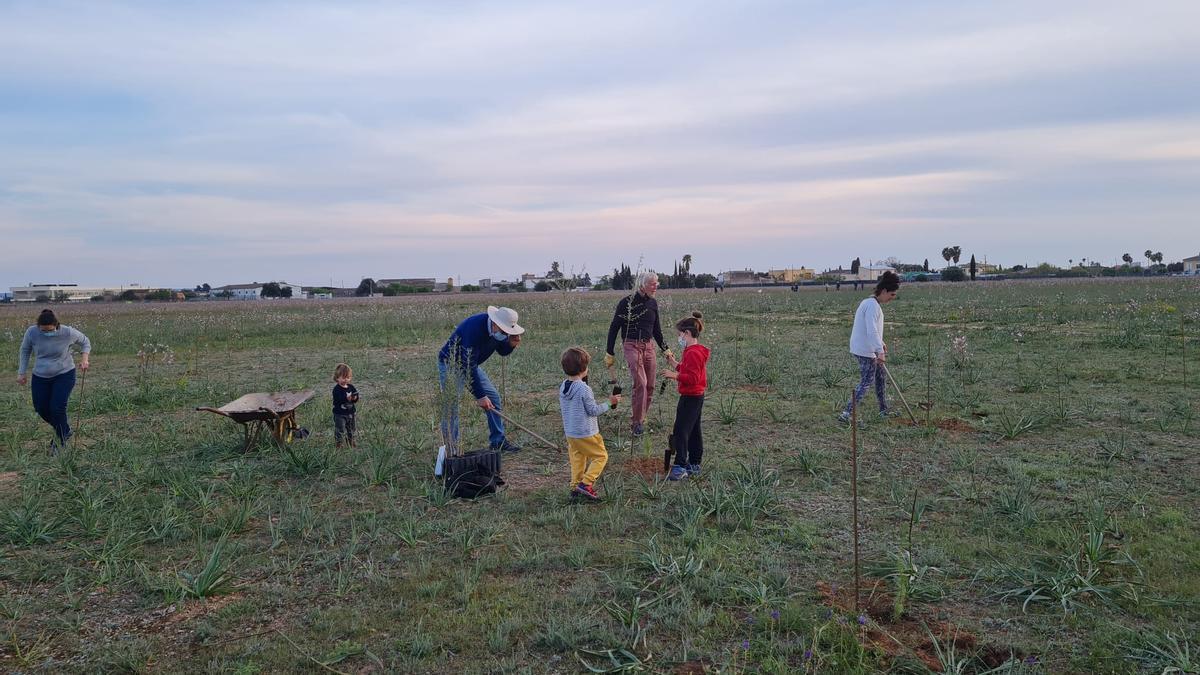 Un grupo de vecinos sembrando árboles en la zona donde AENA tiene proyectado el parque fotovoltaico.