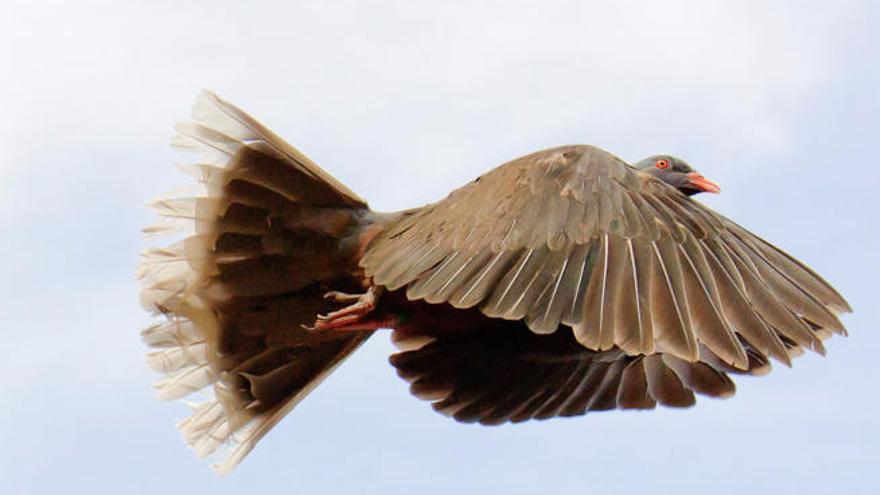 Las aves volaron a las islas hace 8 millones de años