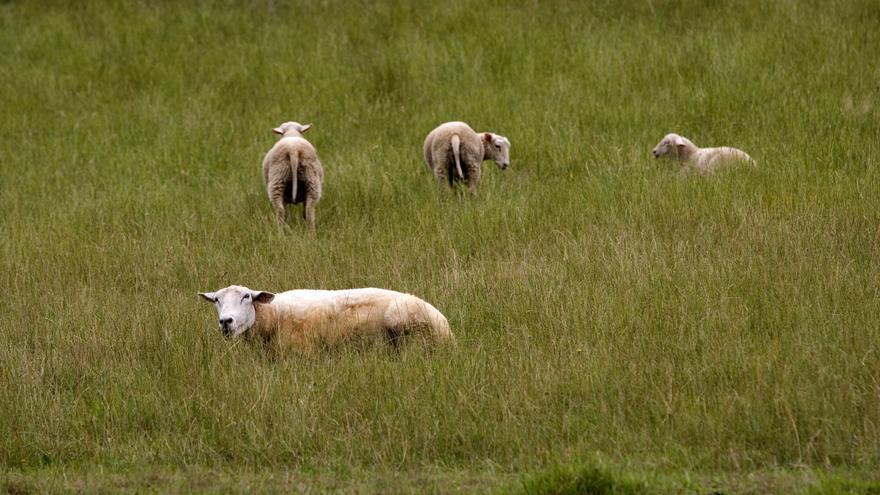 Ganagri vaticina el fin de la subida del ganado a los montes si no se controla al lobo