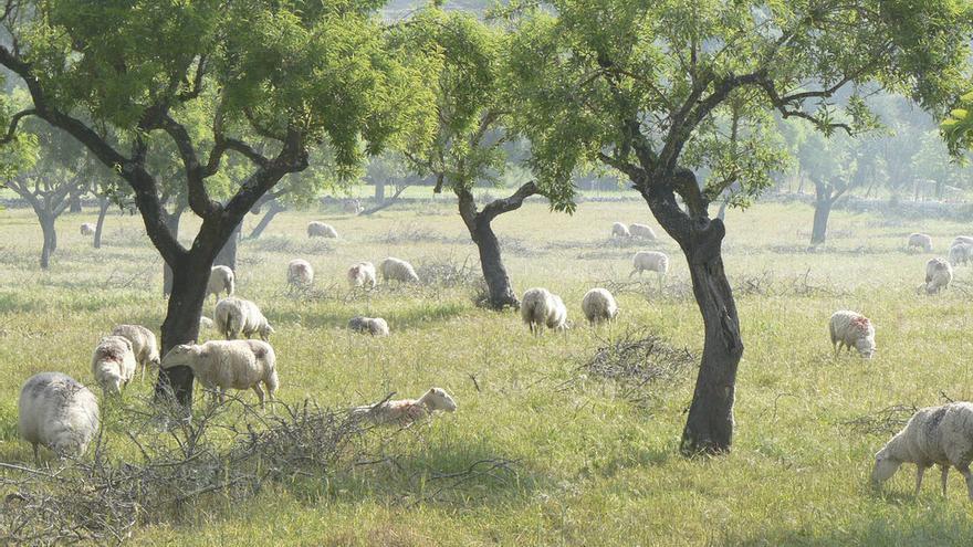 Me ecològic de Mallorca