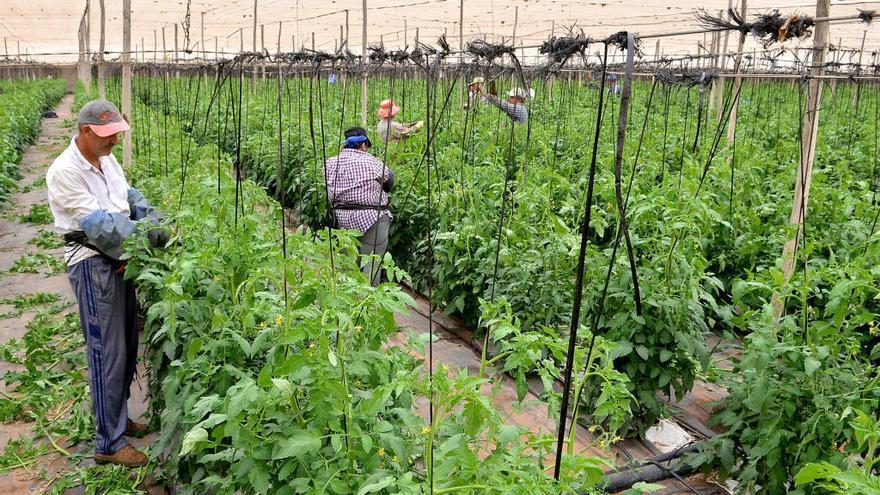 Los tomateros salen indemnes de las acusaciones de fraude del Gobierno central