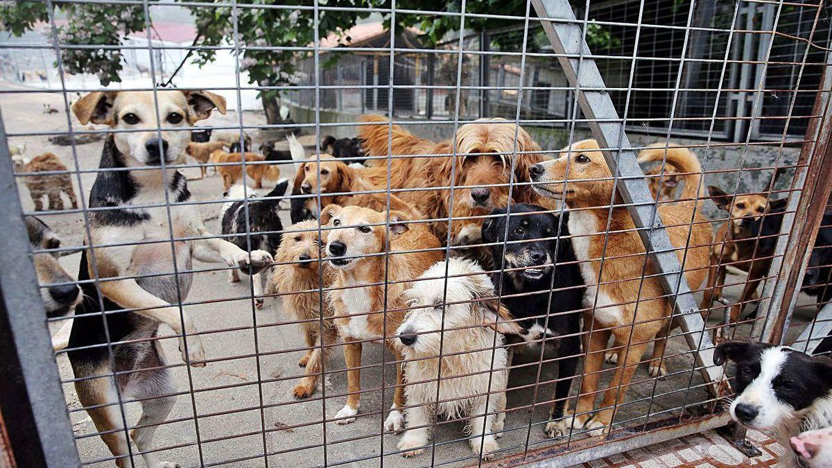 Perros en una protectora.