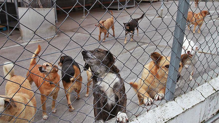 El veterinario de la perrera denuncia graves fallos sanitarios que vulneran leyes en vigor
