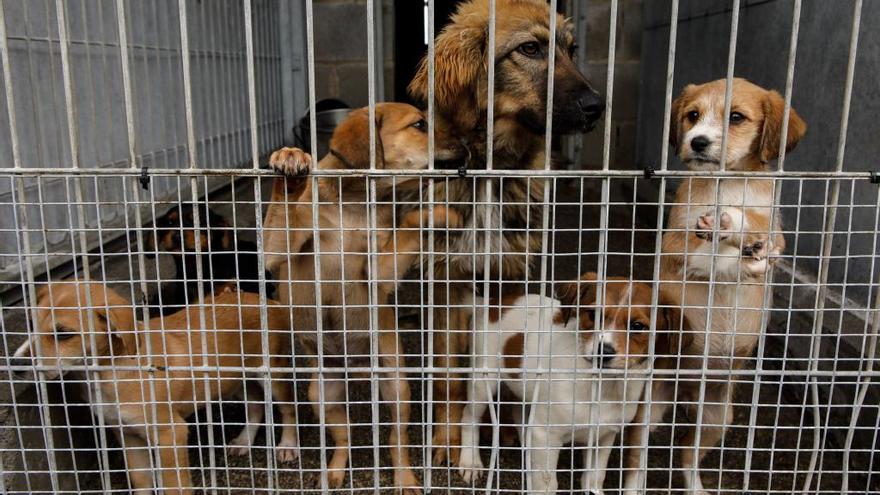 Una inspección que ya se ha iniciado detallará si hay incumplimientos en el albergue de animales