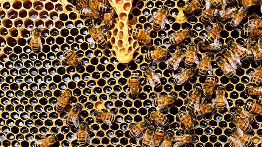"""""""La abeja es vida"""" lucha por salvar la apicultura nacional desde la Comunitat"""