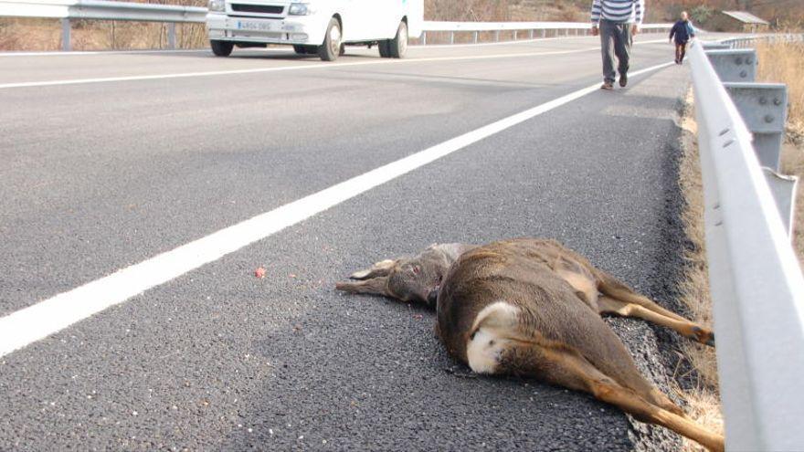 El Gobierno se compromete con UPL a realizar mejoras en la N-631 para evitar accidentes con la fauna