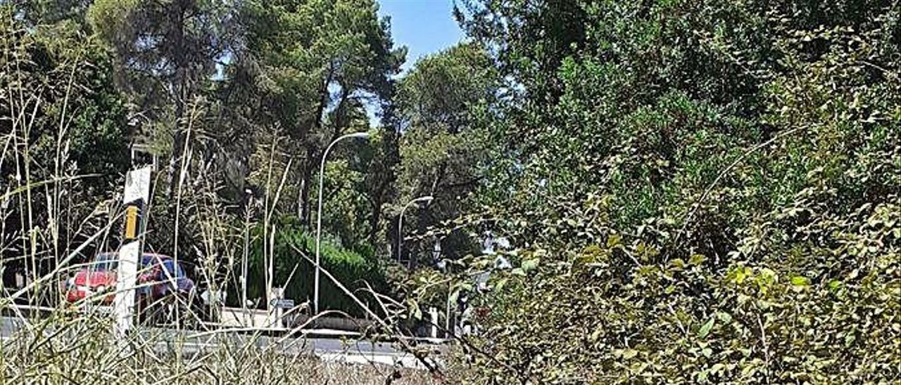 Los cazadores piden entrar en la Murta tras los accidentes causados por jabalíes