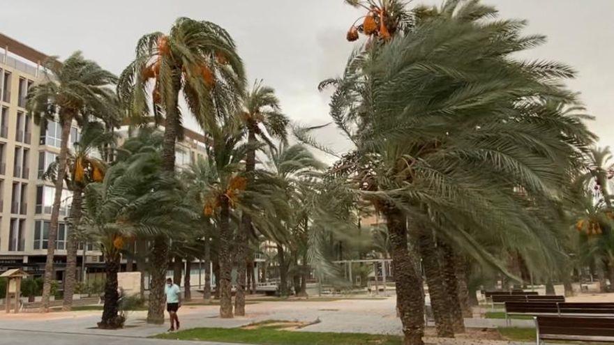 Las fuertes rachas de viento en Elche elevan a casi 50 las atenciones de los bomberos