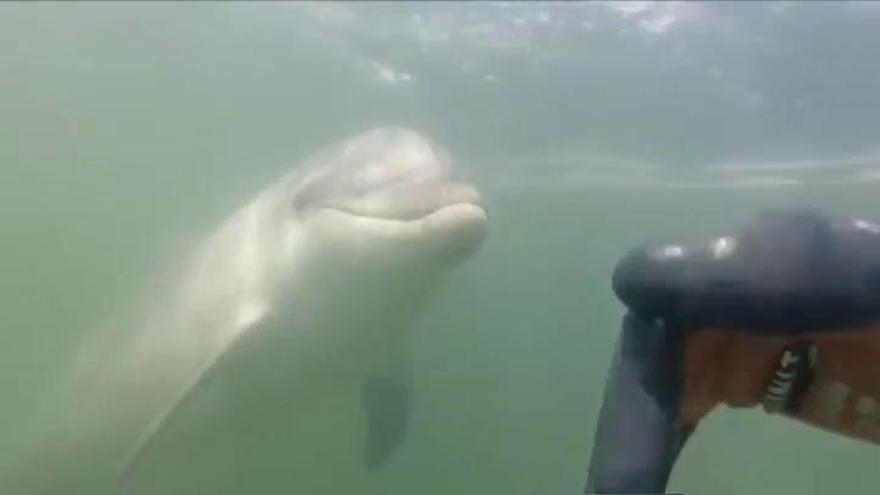 """La emotiva historia de Roger, el mariscador que se hizo amigo de """"Manoliño"""" el delfín"""