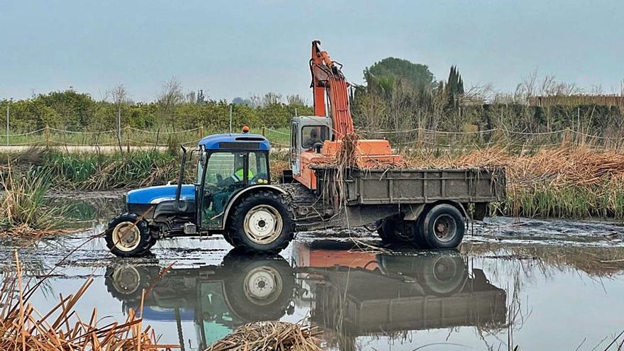 Silla:  ha iniciado esta semana la limpieza del filtro verde de l'Albufera