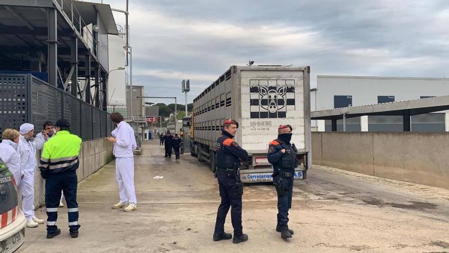 Els activistes que van irrompre en un escorxador s'enfronten a una sanció de 100.000 euros