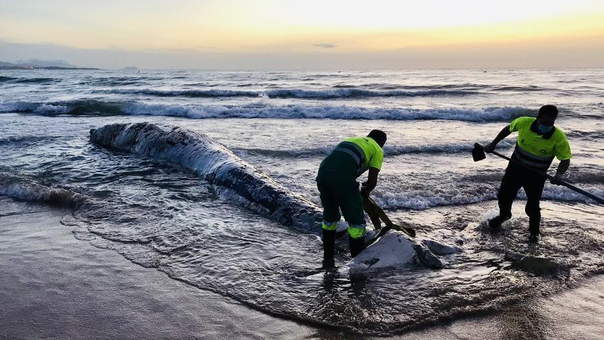 Aparece el cadáver de una ballena de casi 8 toneladas en una playa de Alicante