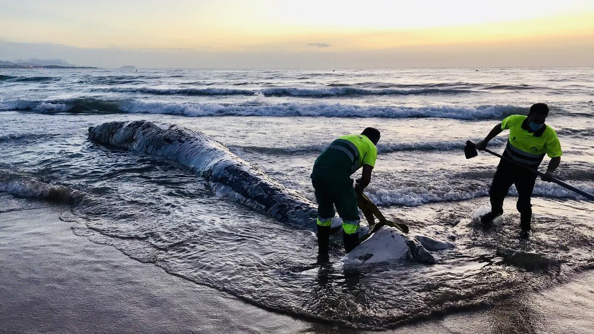 La ballena de la playa de Elche.