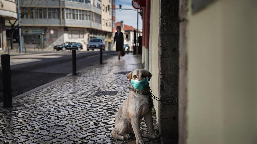 Las mascotas ya disponen de su test rápido para el coronavirus