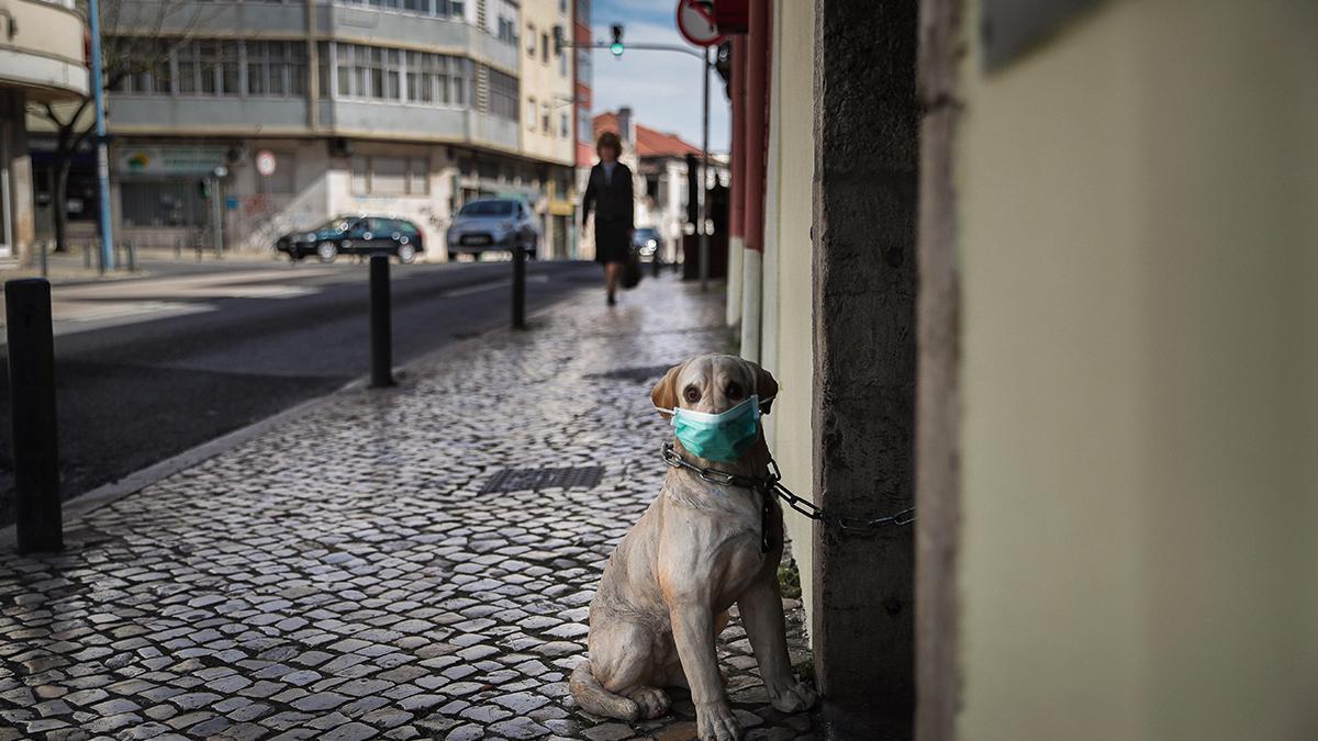 Un perro de porcelana, con mascarilla, en una calle de Amadora, en Portugal