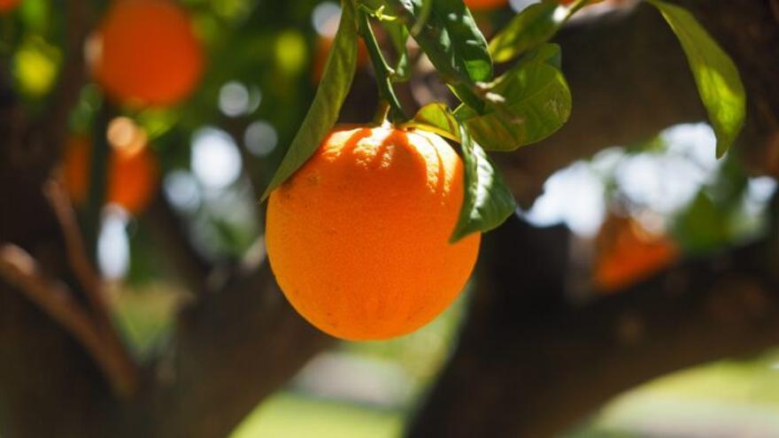 ¿Te comerías una naranja que tiene manchas negras en la piel?