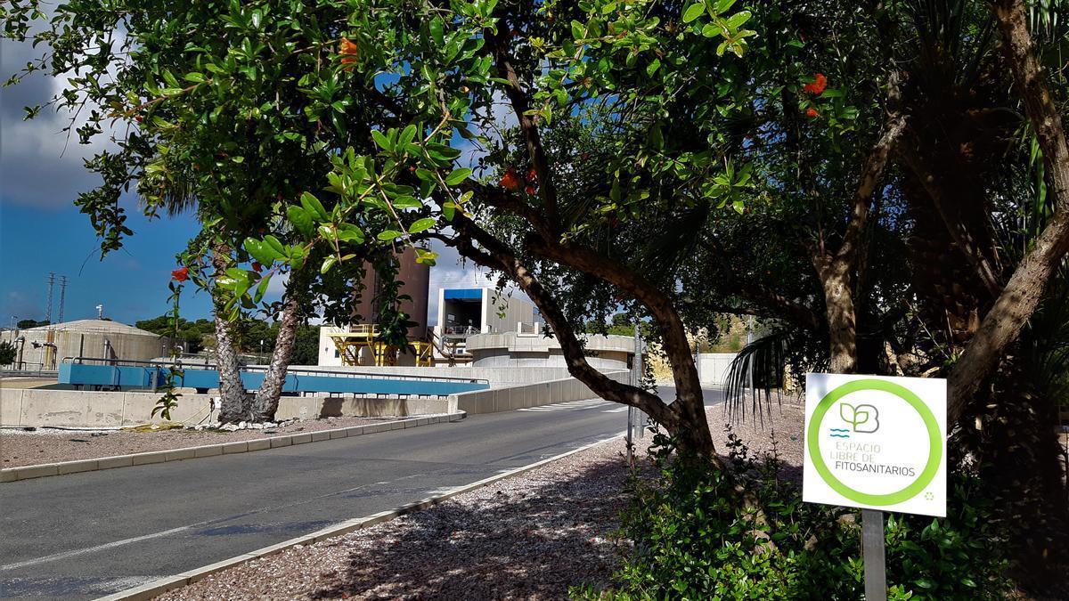 La implicación de Aguas de Alicante con la biodiversidad se traslada a la naturalización y la eliminación de fitosanitarios y pesticidas en sus instalaciones.
