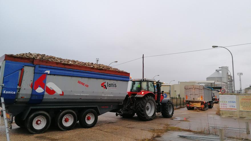 Azucarera cierra la campaña en Toro con la recepción de 309.864 toneladas de remolacha