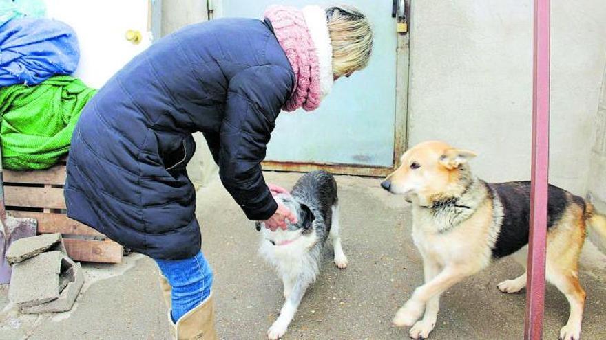 El número de perros abandonados se dispara en Benavente